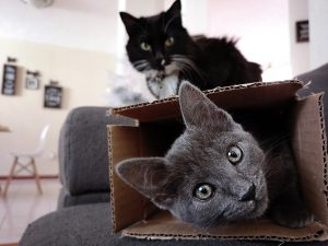 Two cats in a cardboard box looking at the camera